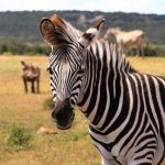From Unicorn to Zebra: Which Business Zoo Do You Belong to?